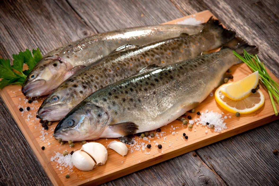 راهنمای خرید، قبل از خرید ماهی به چه نکاتی توجه کنیم؟