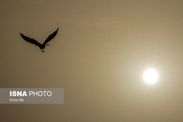 آلودگی هوا پرندگان را از شهر فراری می دهد